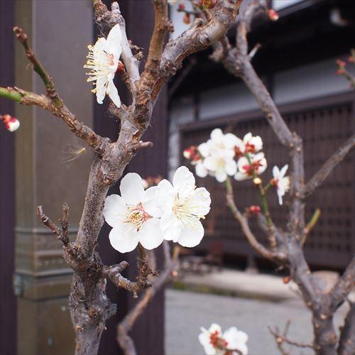 ゆうブログケロブログ飛騨高山2019年3月 (21)