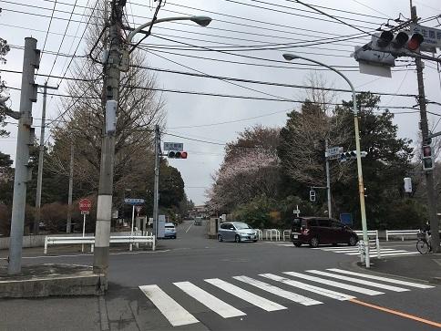 190331 zenshoen-sakura-15