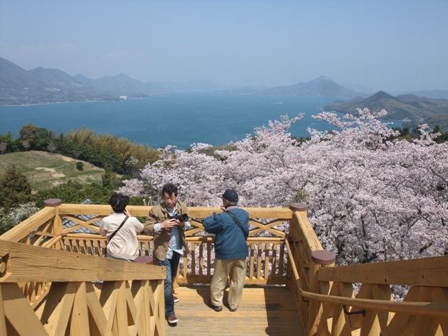 開山の桜 (3)