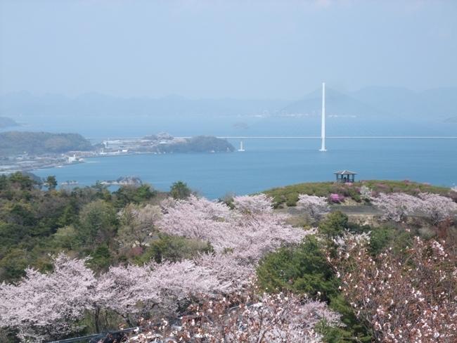 開山の桜 (1)