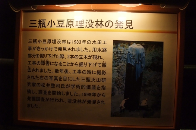 三瓶小豆原埋没林公園 (3)