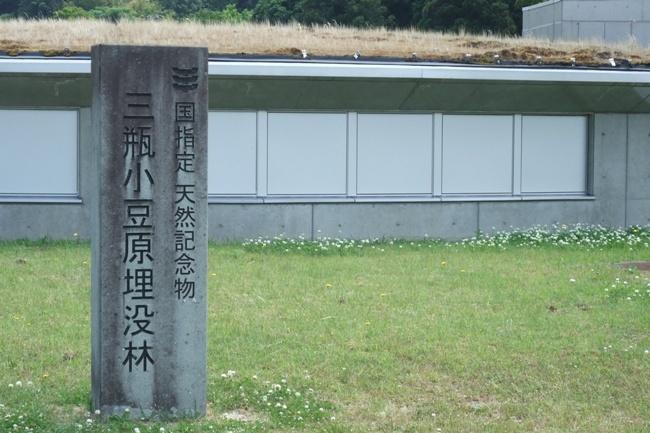 三瓶小豆原埋没林公園 (9)