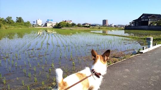 小野田駅前方面