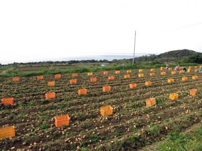 190318-2=ジャガイモ収穫 a耕整碑下畑