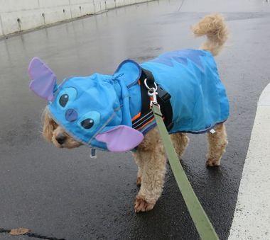 003小雨散歩