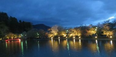 012夜桜