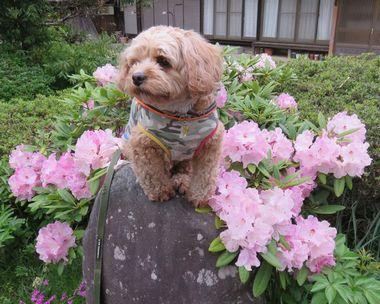 002石楠花