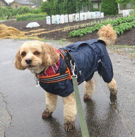 013雨散歩