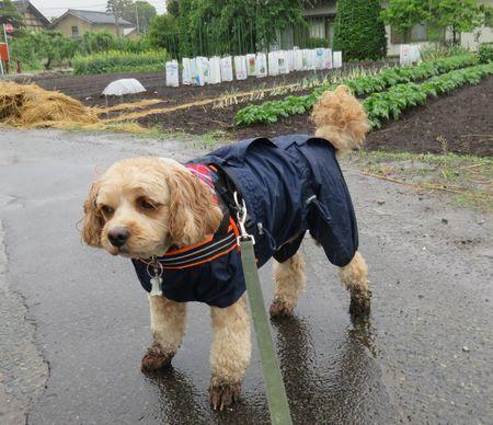 015雨散歩
