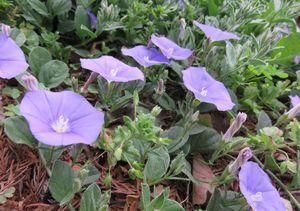 025青紫色