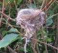 027野鳥の巣