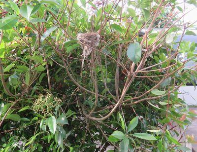 029野鳥の巣