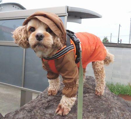 001雨散歩