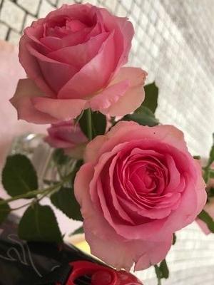 IMG_0324薔薇