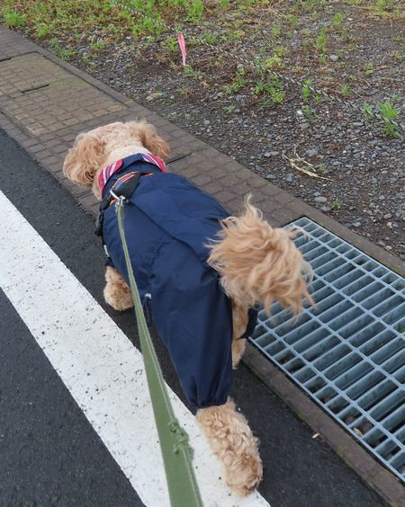 001朝散歩