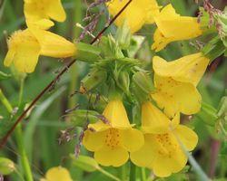 033黄色い花