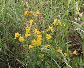 032黄色い花