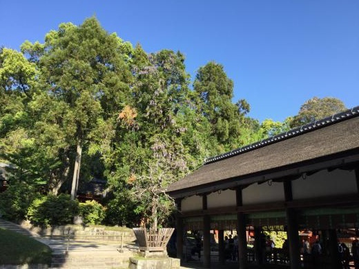 190504奈良春日大社幣殿・舞殿