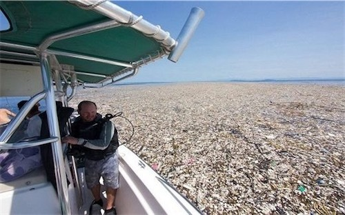 カリブ海garbage