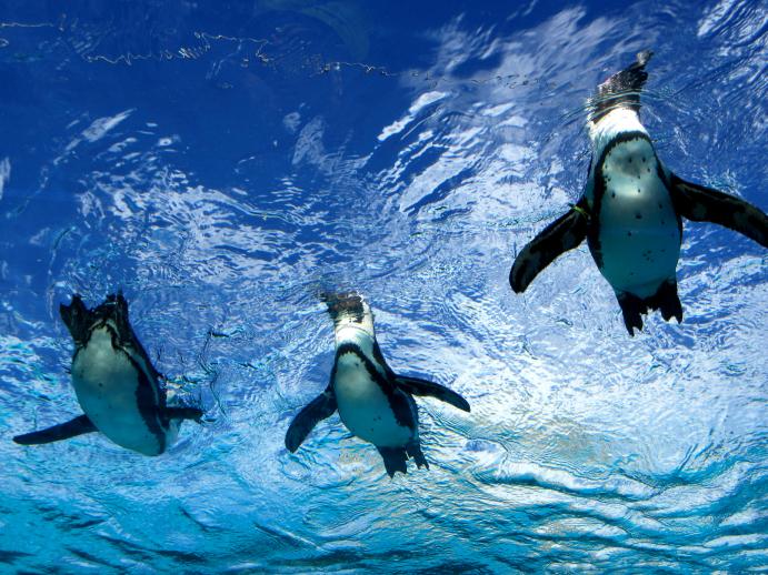 天空ペンギン
