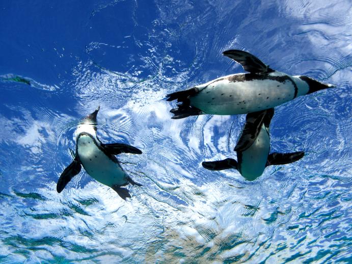 天空ペンギン2
