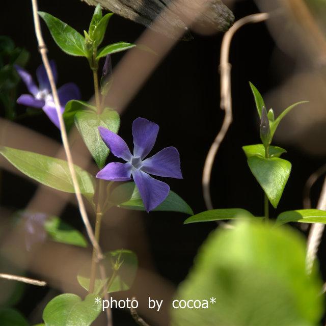 DSC_0026 2015-03-21 10-05-06