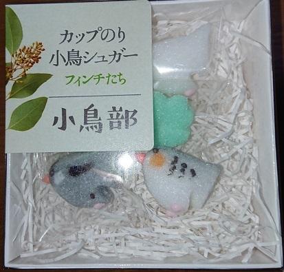小鳥部シュガーフィンチ編