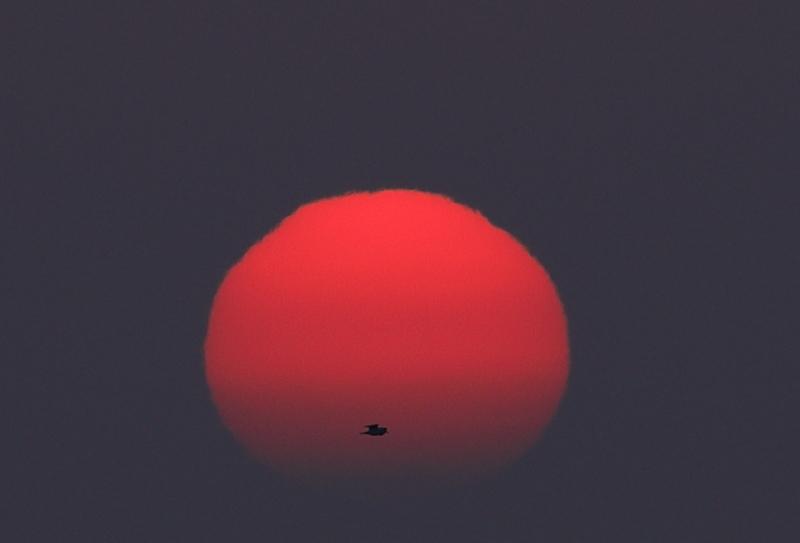 1578 太陽の中にカモメ