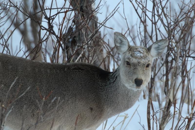 3808 鹿