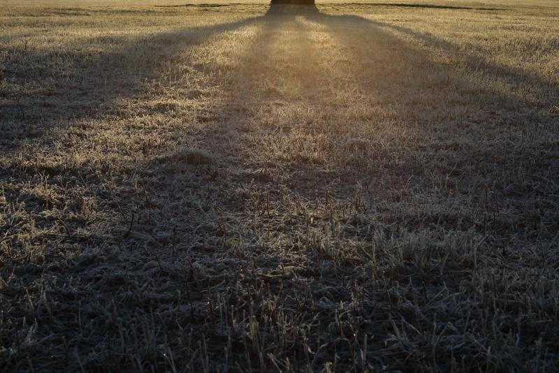 6983 霜が降りた朝
