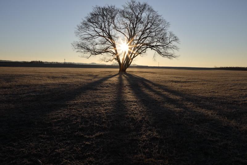 6994 日の出と樹影