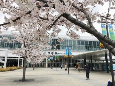 桜いっぱいの富山駅 201904