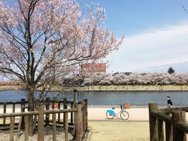 環水公園さくらの間の自転車 201904