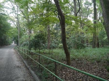 糺の森(2)