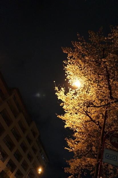 街灯で照らされた桜