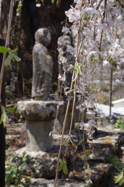 お地蔵さまと枝垂桜