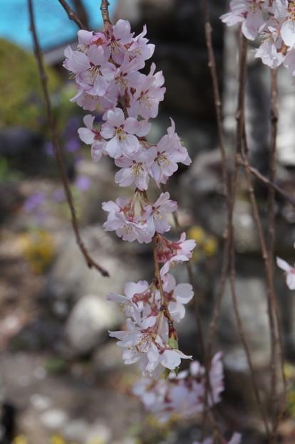 花をズームアップ