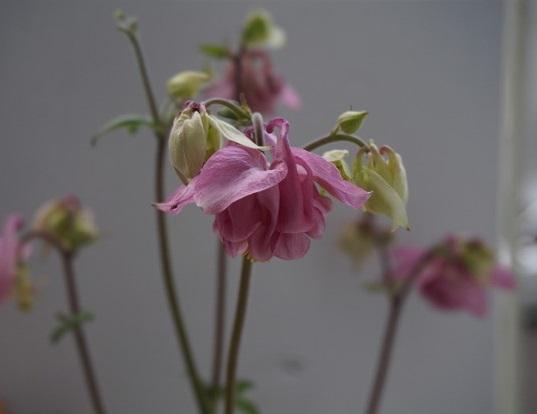 一番最初に咲いた花