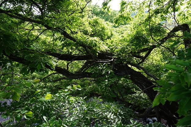 絡まった木の枝