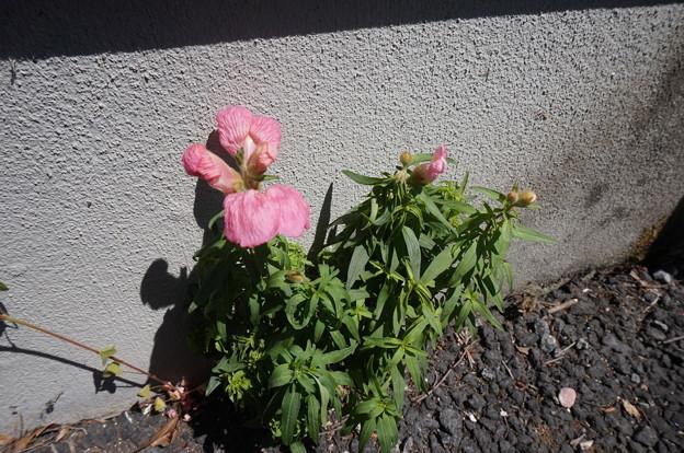 謎の花ww