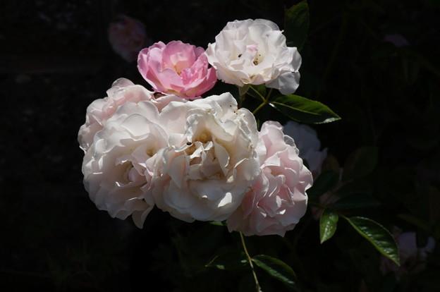 頂き物の花