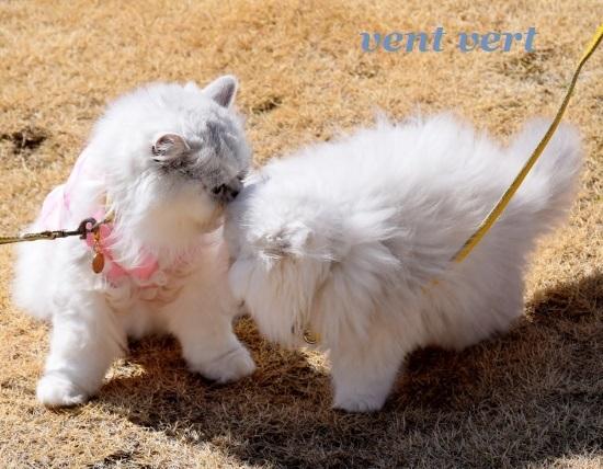猫パンチ6