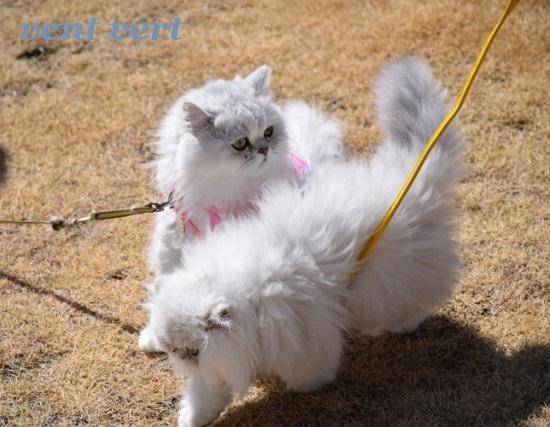 猫パンチ8