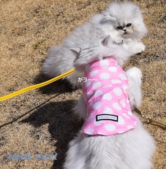 猫パンチ11