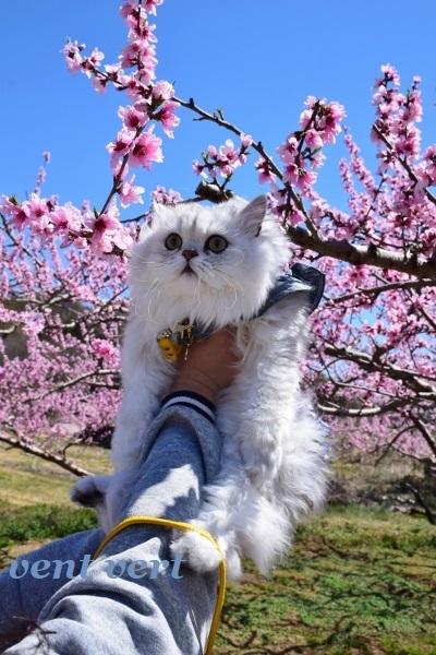 桃の花を見に5