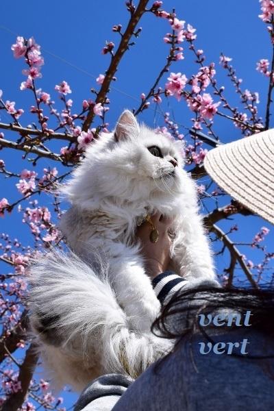桃の花を見に4