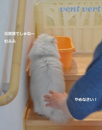 野次猫10