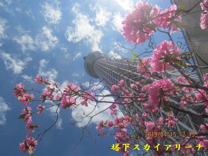 20190415浅草ー240