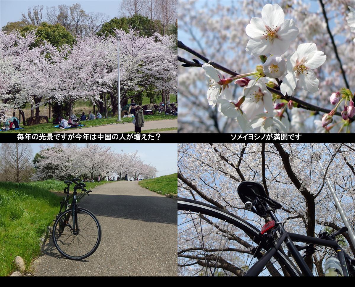 2019sakura01_R.jpg