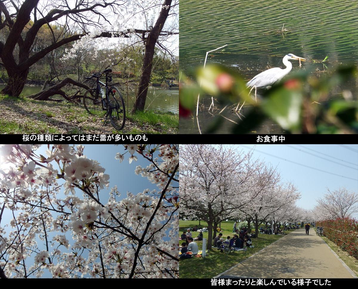 2019sakura04_R.jpg